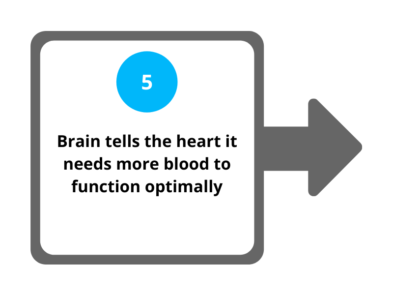 Step 5 Brain tells the heart it needs more blood to function optimally