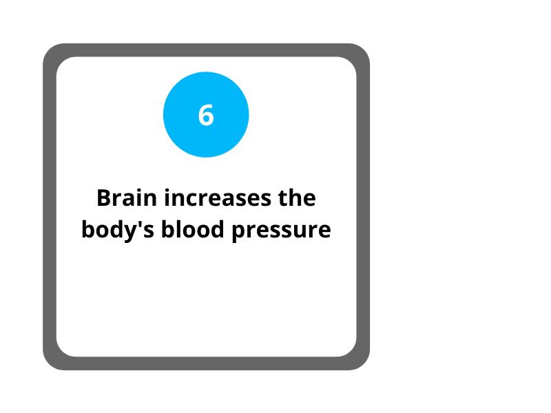 Step 6 Brain Increases the Body's Blood Pressure